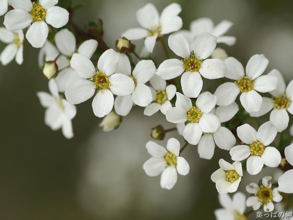 bloemen Suriname