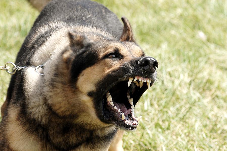 aanval hond FamilieNieuws Suriname