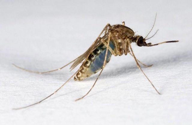 muskiet Suriname FamilieNieuws BOG ziek