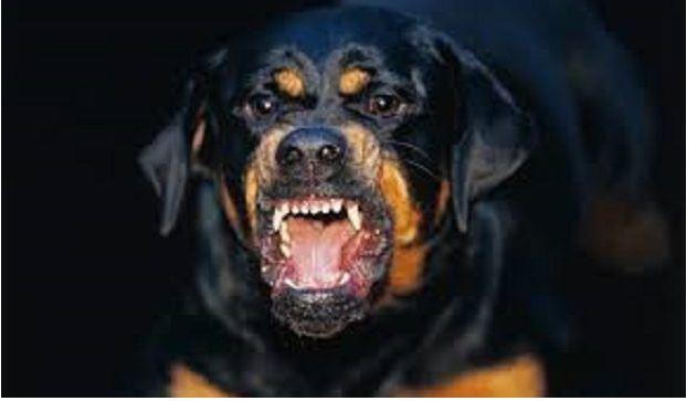 hond overleden Suriname FamilieNieuws