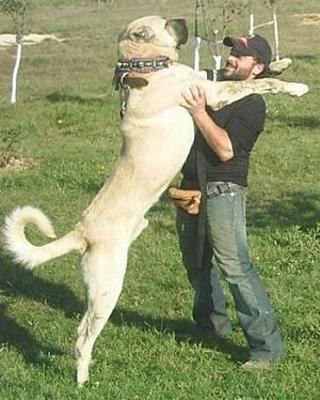 man en hond FamilieNieuws Suriname