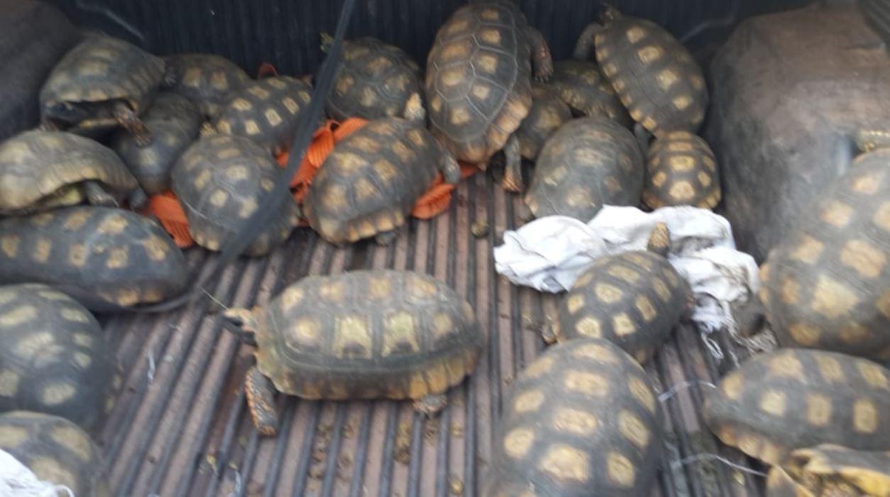 schildpadden Suriname