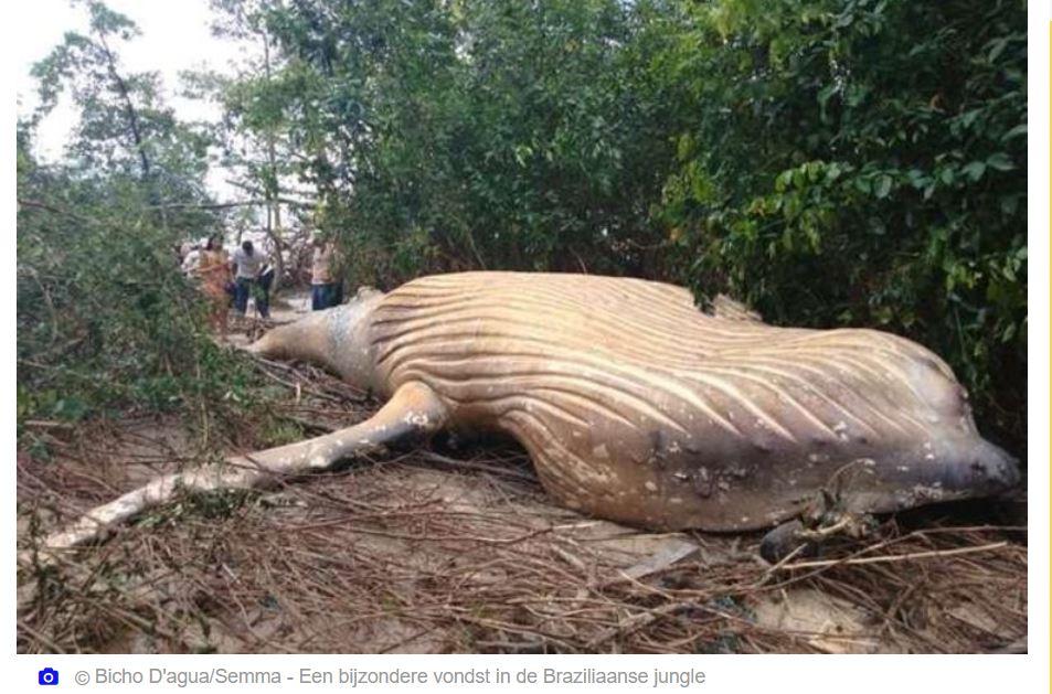 walvis Brazilië