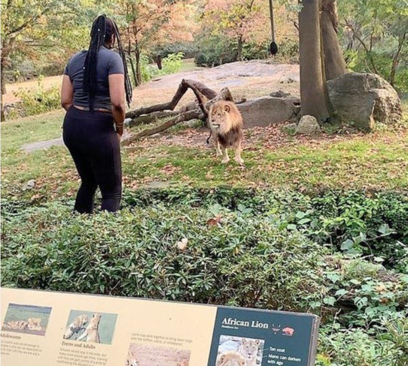 dierentuin Amerika