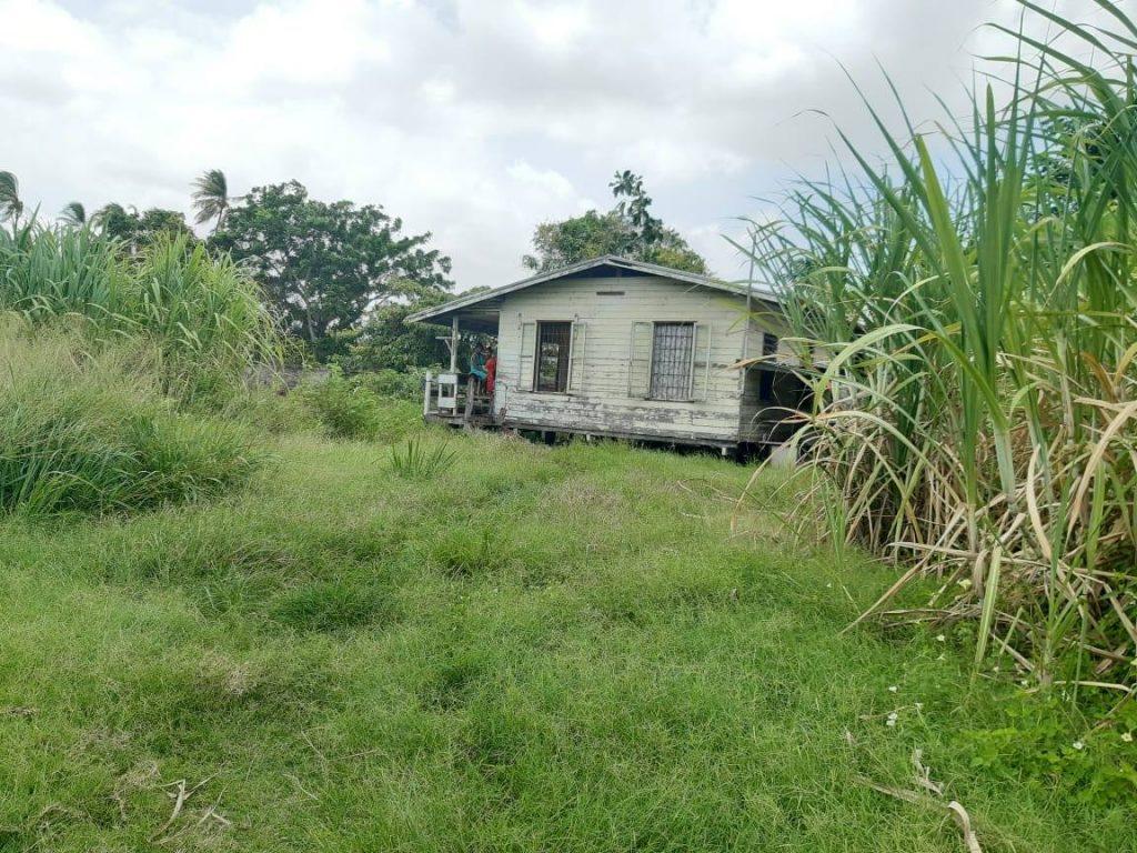 moeder Suriname