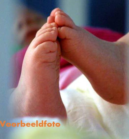 baby Nederland