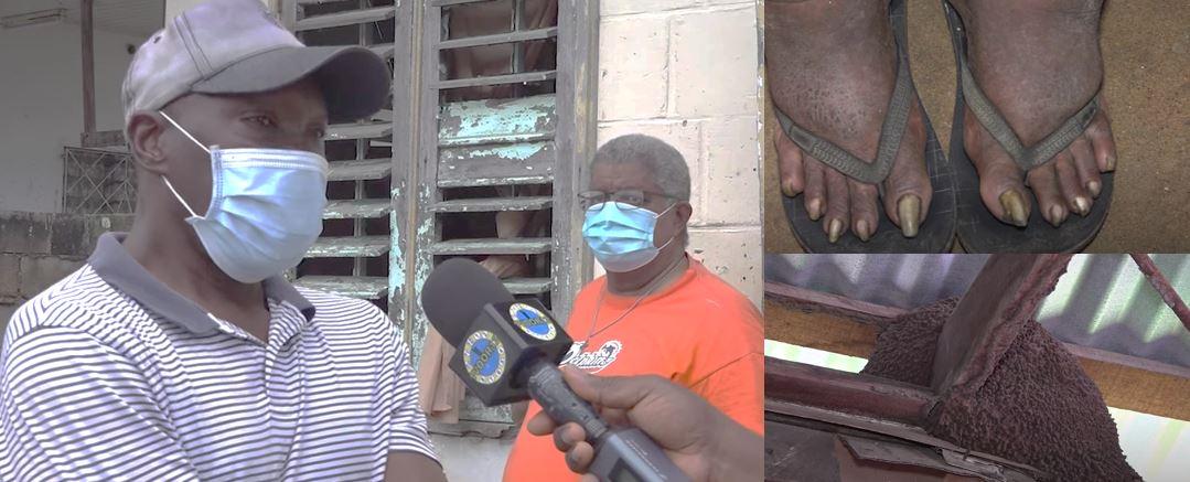 Kaersenhout Paramaribo